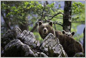 Orsi del Monte Nevoso, Slovenia